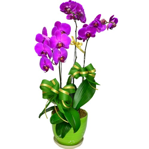 3 Orchids (colour of your choice)
