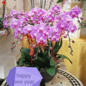12 Orchids (Colour of your Choice)
