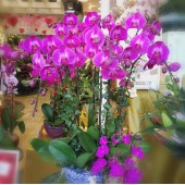 9 Orchids (Colour of your choice)