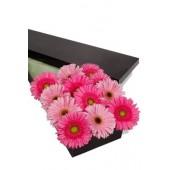 12 Pink Tones Gerberas Presentation Box